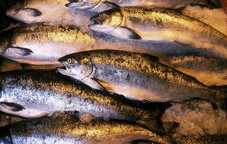 Морские виды рыбы