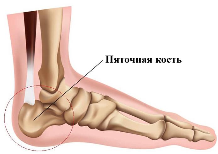 Пяточная кость