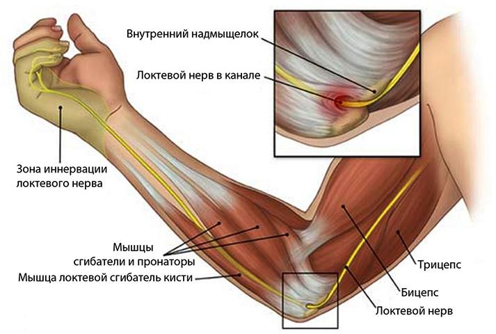 Расположение локтевого нерва