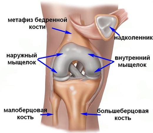 Изображение - Дегенеративное изменение хрящей коленного сустава kolen199