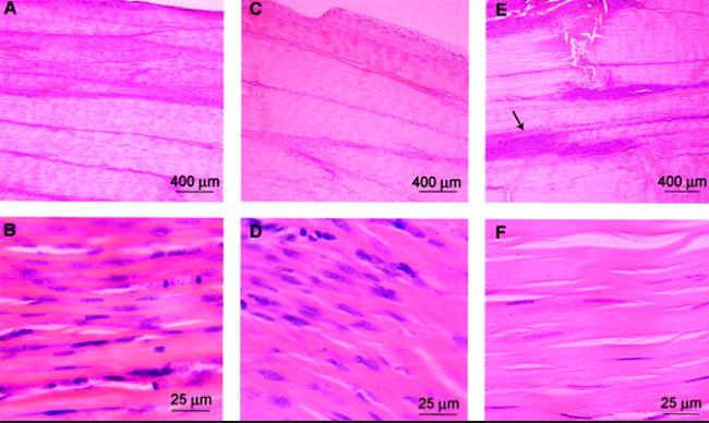 Клеточное строение