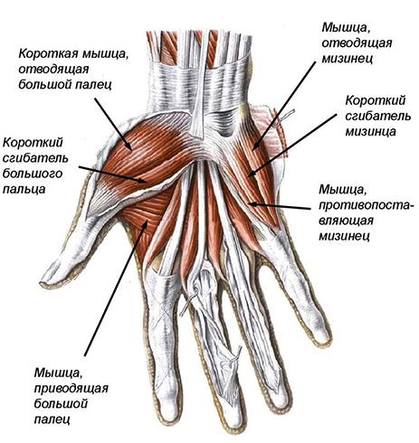 Изображение - Лучезапястный сустав руки mis12