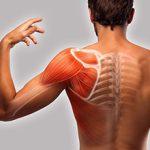 Хруст в лопатке при вращении плечом: возможные причины и что делать