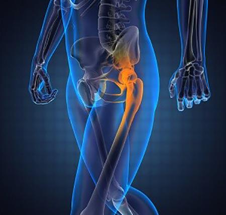 Изображение - Строение мышц тазобедренного сустава sust11