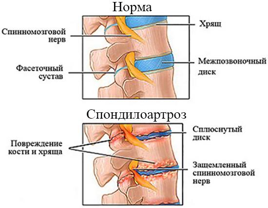Норма и патология