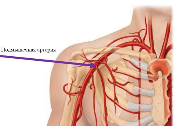Подмышечная артерия