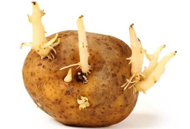 Ростки на картофеле