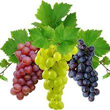 Виноград при подагре — можно ли есть, полезные свойства