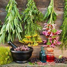 Травы для суставов и хрящей: виды и полезные свойства