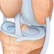 Коленный сустав и связки — строение и анатомия