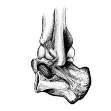 Суставы человека: виды, анатомия, строение